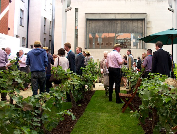 McGuigan Wines' pop up city vineyard in Dublin