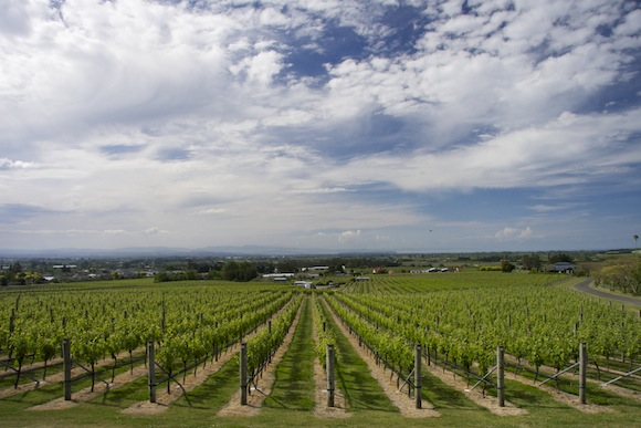 Te Mata vineyard