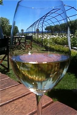 Herzog Winery garden