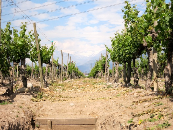 Concha Y Toro's Puente Alto vineyard in Chile, Don Melchor