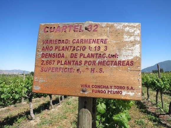 Concha Y Toro's Peumo vineyard