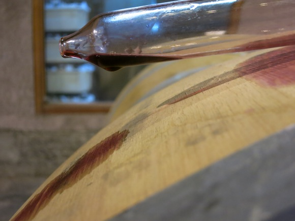 Barrel sample of Carmenere in Chile