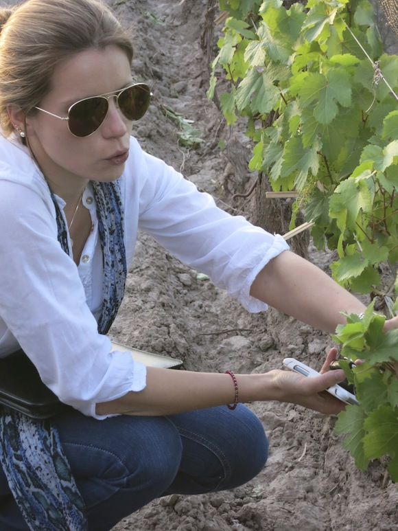 Winemaker Victoria Prandina of Bodega Trivento inspecting vines that make Eolo Malbec