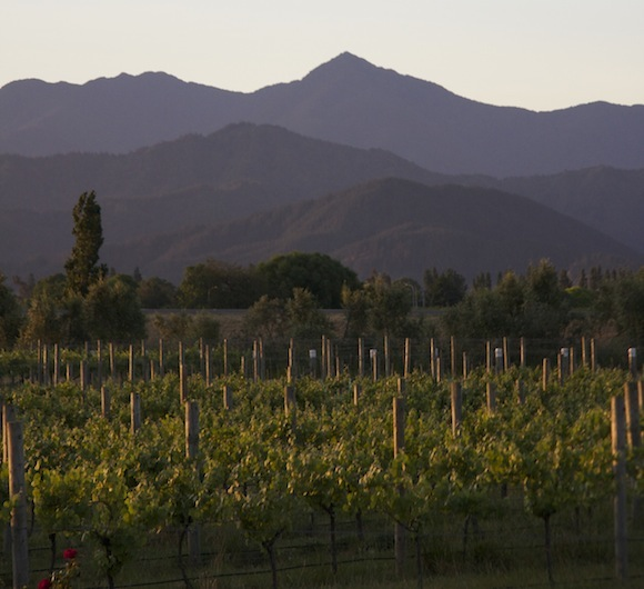 Rows of vines with mountains in the back