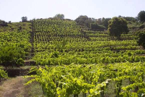 Vini Biondi's Chianta vineyard on the slopes of Etna, Sicily