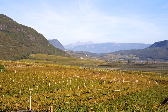 A view of the Alto Adige wine region in Italy from Cantina Tramin