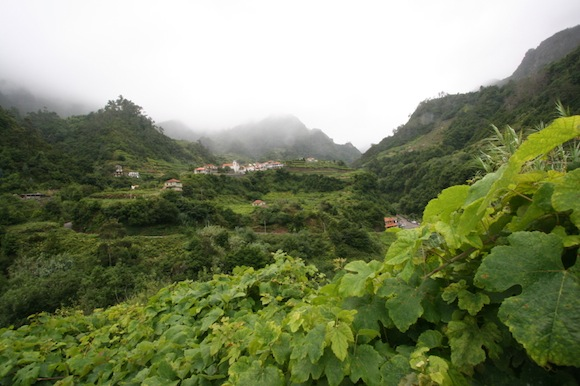 Island of Madeira, vines, fog